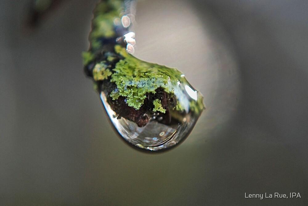lichen drop 1 by Lenny La Rue, IPA