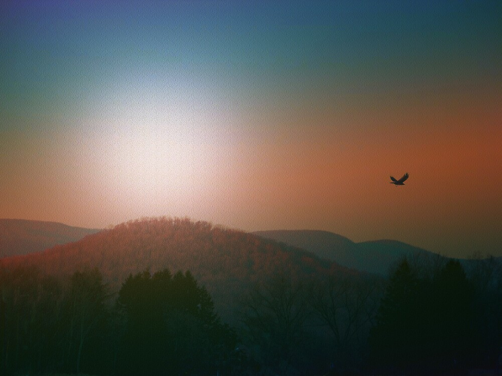 Fly to the Mountain by Judi Taylor