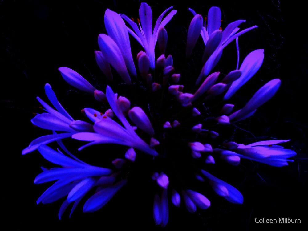 Rhapsody in blue by Colleen Milburn