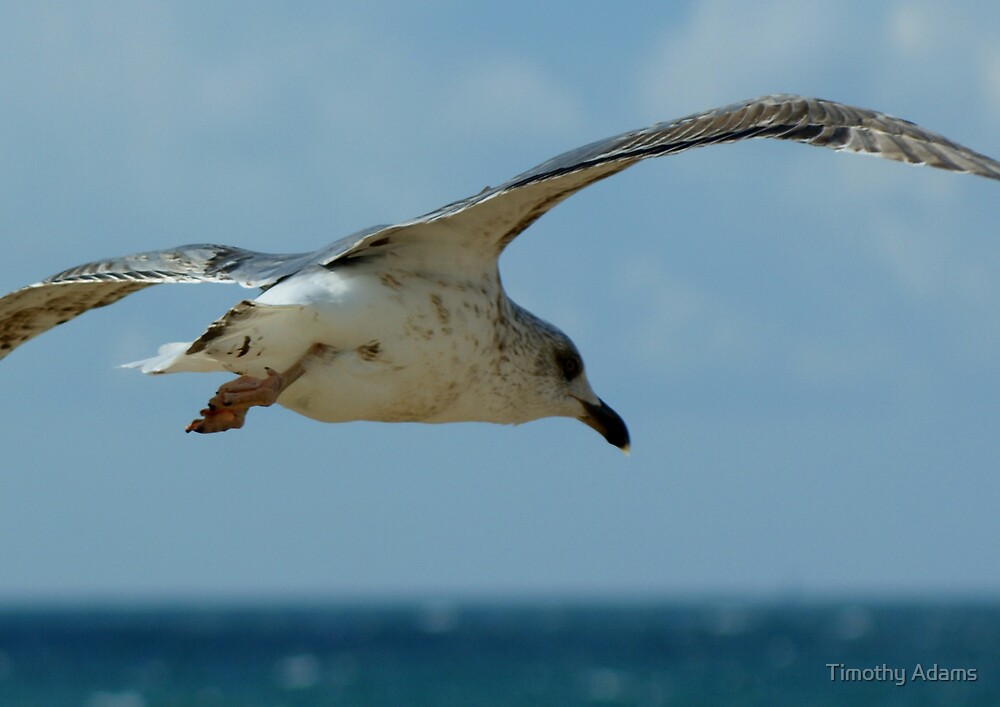 Seagull in Tariffa by Timothy Adams