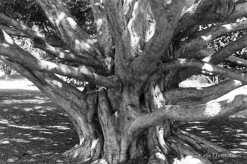 City Tree by Katie Christofides