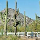 Saguaro Cactus - Read Description  by barnsis