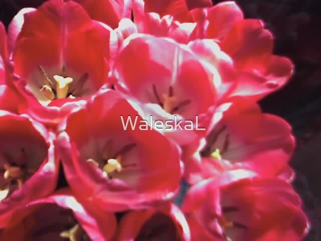 My Pretty Flowers by WaleskaL