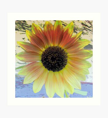 LOOKING  INTO A  SUNFLOWER    Art Print