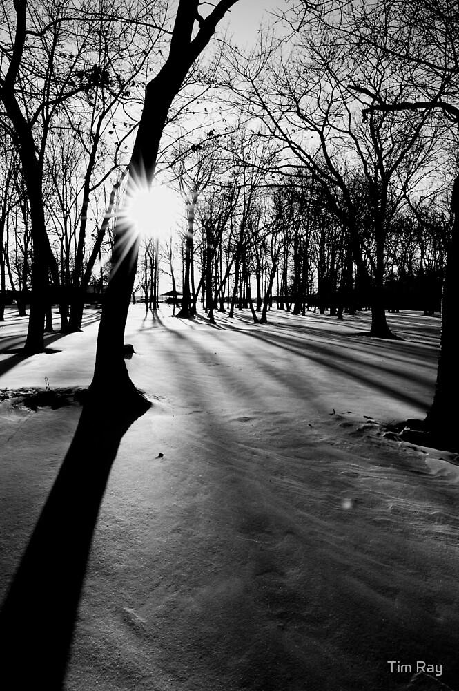 Snowy Shadows by Tim Ray