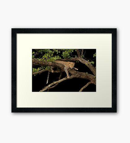 Leopard in mopane tree 2 Framed Print