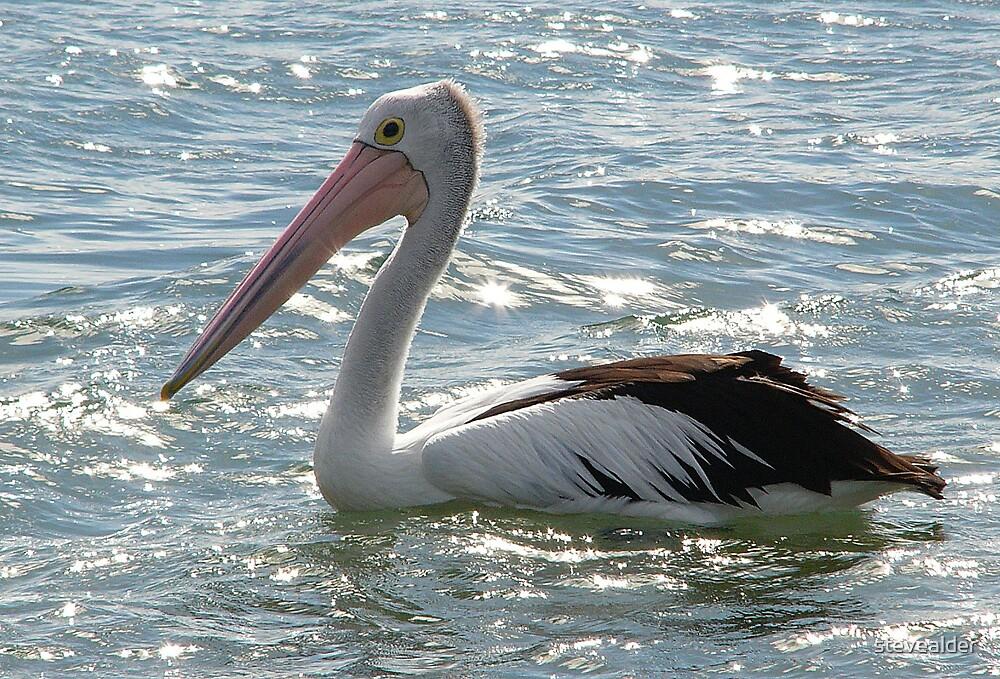 Pelican - The Drifter by stevealder