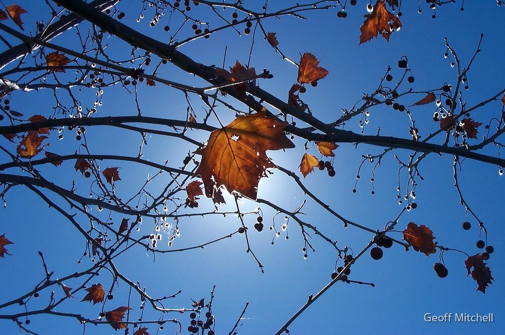 Australian autumn by Geoff Mitchell