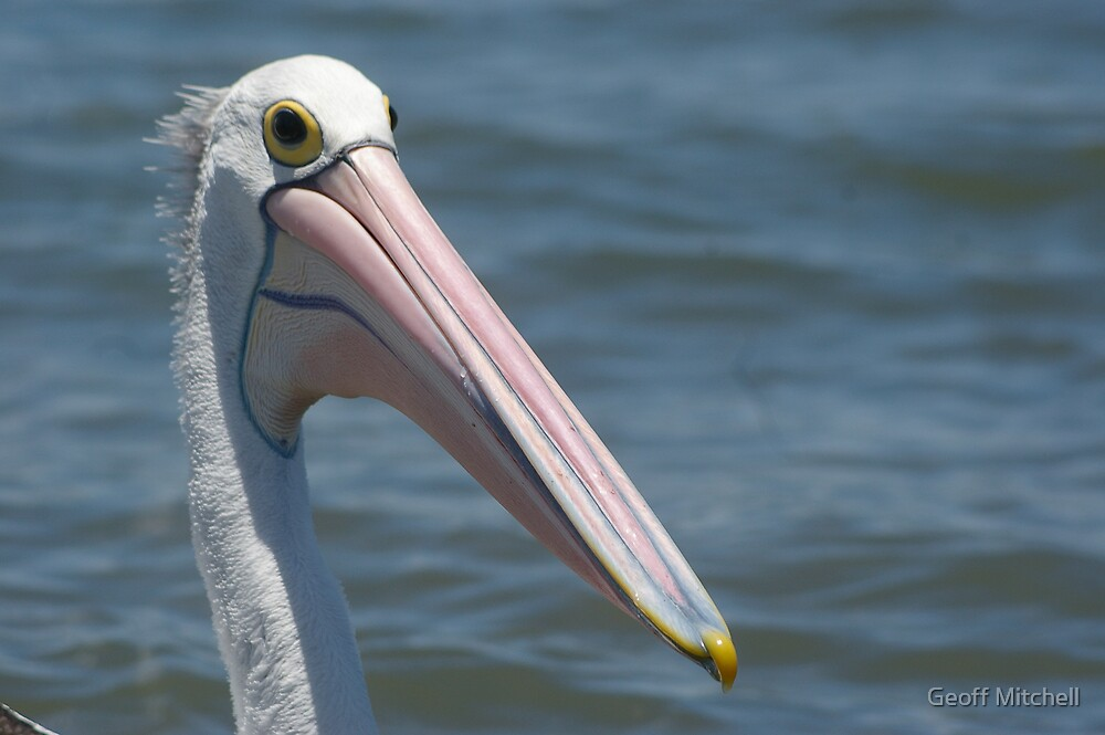 Pelican by Geoff Mitchell