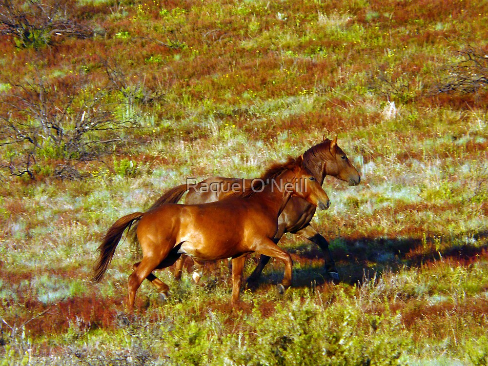 Brumbies on the Plain by Raquel O'Neill