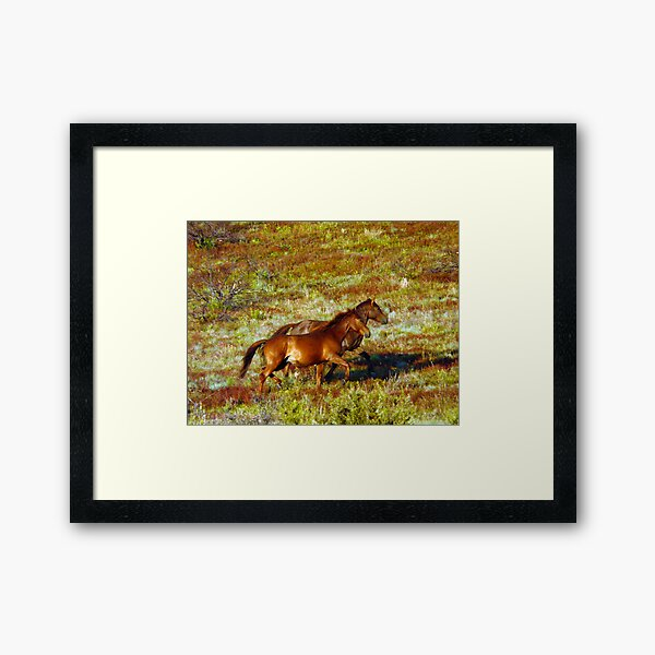 Brumbies on the Plain Framed Art Print