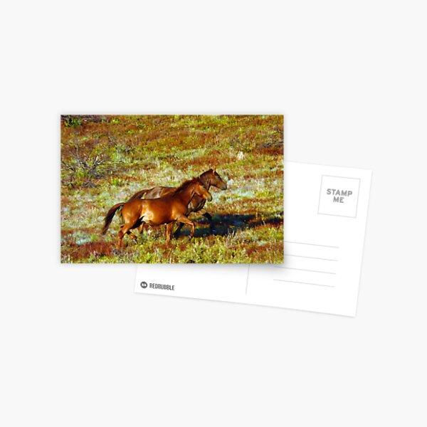 Brumbies on the Plain Postcard