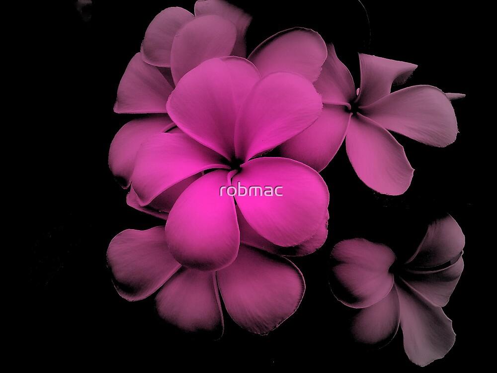 frangipan flower 2 by robmac