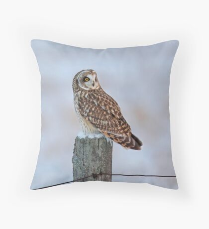 Short-eared owl in winter Throw Pillow