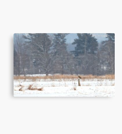 Short-Eared owl on post in winter Canvas Print