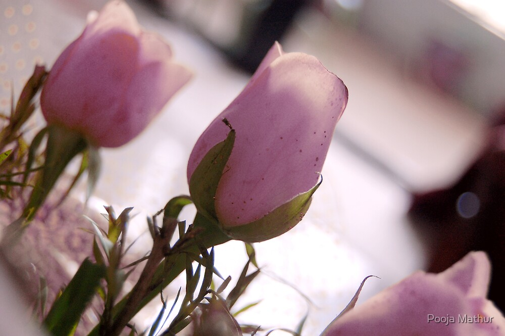 Pretty Pink Roses by Pooja Mathur