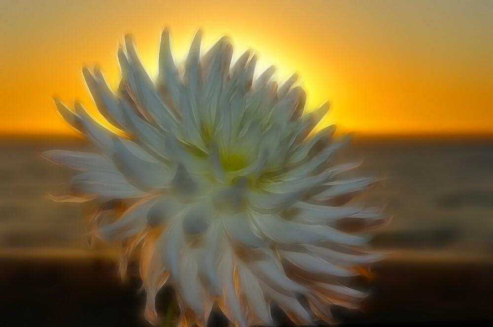 ~~  Dahlia Dreaming ~~ by JenniferW