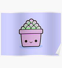 Succulent in cute pot Poster