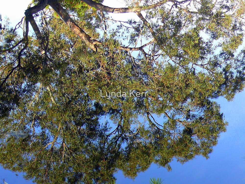 Gum Tree Reflection by Lynda Kerr
