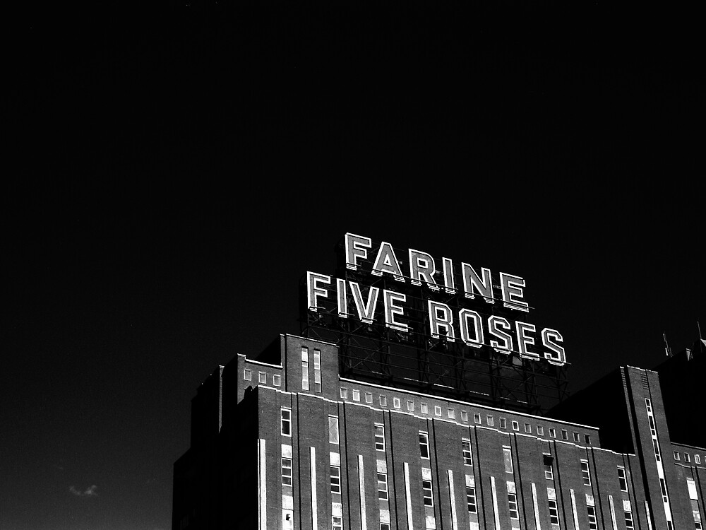 Five roses by thonycity