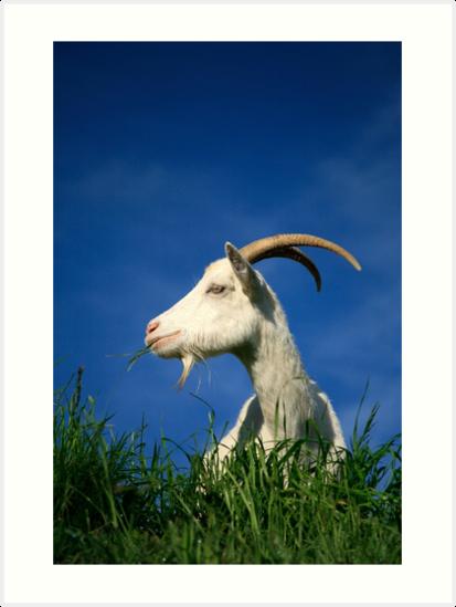 Goat by Gaspar Avila