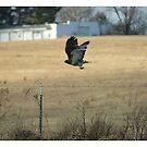 In flight by danabee