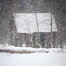 Snow Blind by Carol Barona