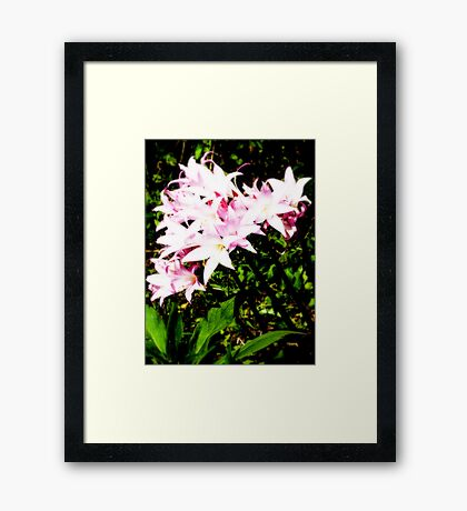 Lily the Pink Framed Print