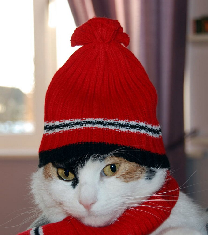 Katie Cat Hat Scarf  by Paul Loveday