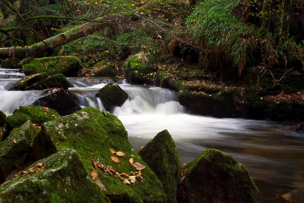 Golitha Falls Bodmin Moor by David Wilkins