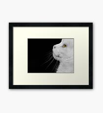 Casper In Profile Framed Print