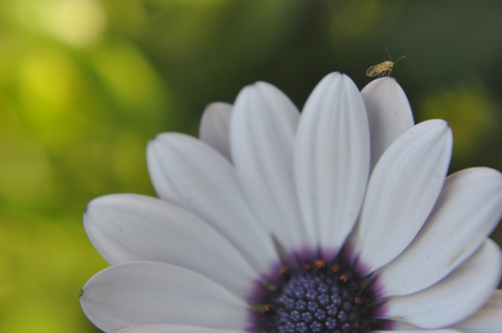 Bug on Flower by wadelee