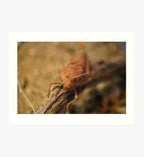 Desert Grasshopper Art Print