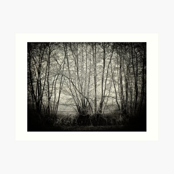 branches in the mist Art Print