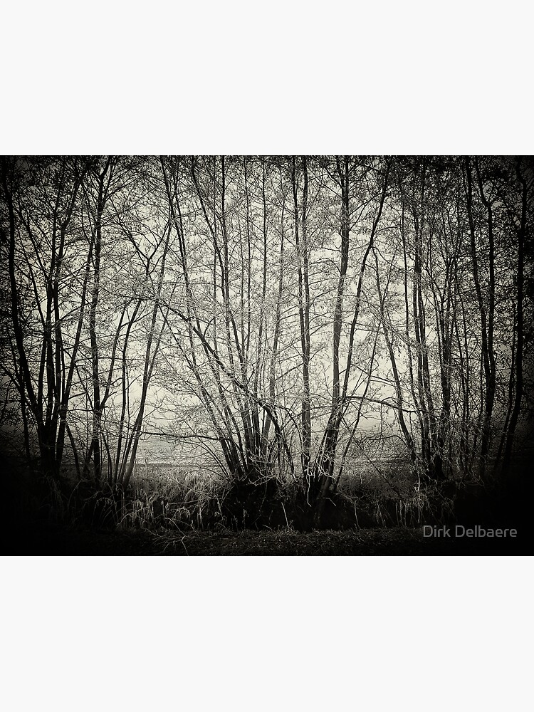 branches in the mist by Delbaere