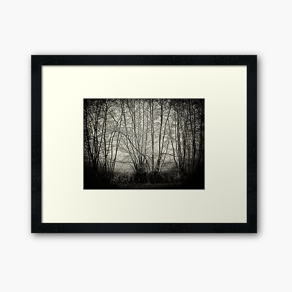 branches in the mist Framed Art Print