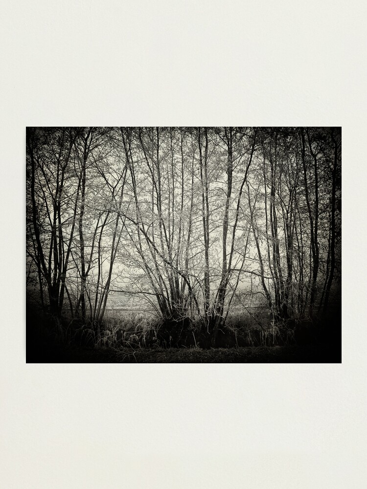 Alternate view of branches in the mist Photographic Print
