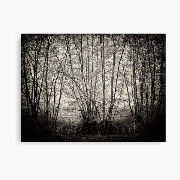 branches in the mist Canvas Print