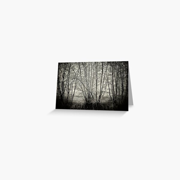branches in the mist Greeting Card