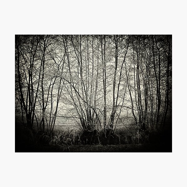 branches in the mist Photographic Print