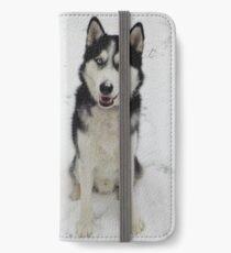 Husky in snow iPhone Wallet/Case/Skin