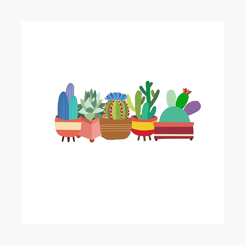 Colorful Cacti Photographic Print