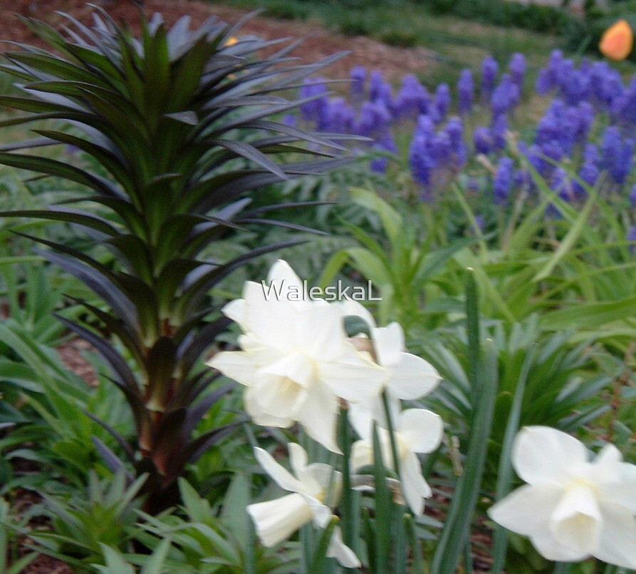 Simple Field Flowers by WaleskaL