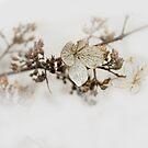 January Survivor by AnneDB