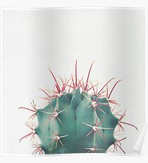 Ferocactus Poster