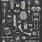 Oddities: X-Ray by Camille Chew