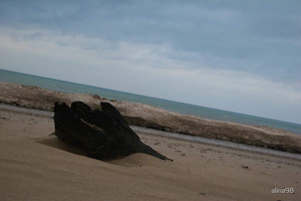 Slanted log on the beach by alina98