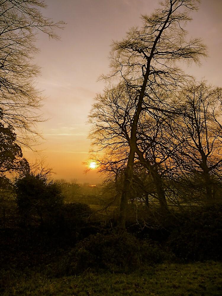 Sun 1 by Robin  Woodward