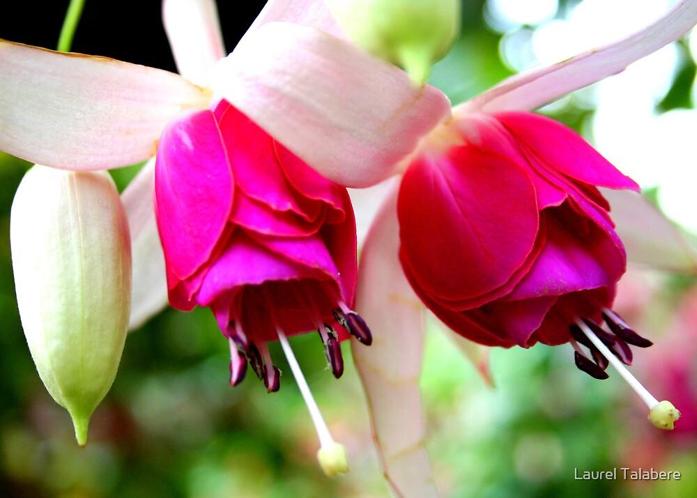 Fushia Blooms by Laurel Talabere