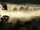 """Gums in the Mist"" by debsphotos"